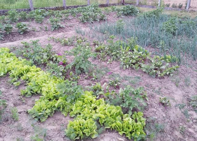 Vrt mjesec dana nakon sadnje