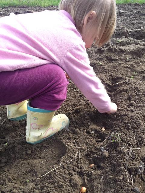 Organizacija vrta - sadnja